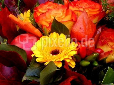 Blumen für jede Jahreszeit