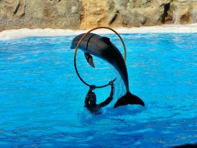 Teneriffa - Puerto de la Cruz - Loro Parque - Delfinshow 2