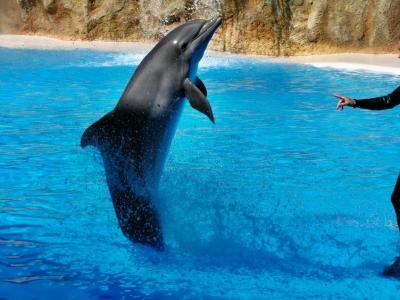 Teneriffa - Puerto de la Cruz - Loro Parque - Delfinshow 3