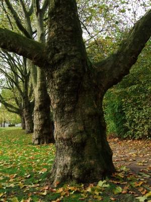Großer Baum im Herbst