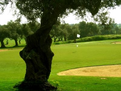 Grün mit Olivenbäumen