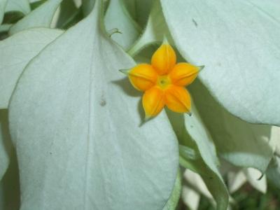 Blumen in Java