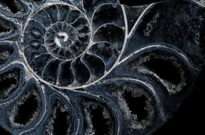 Kristallammonith