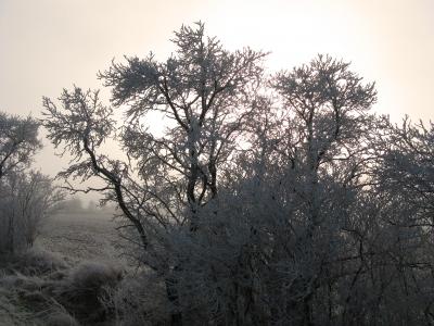 Winter und Raureif 45
