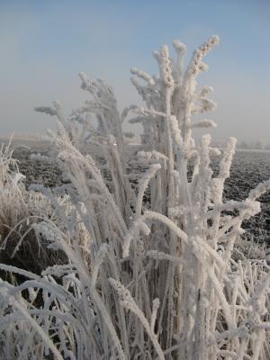 Winter und Raureif 55