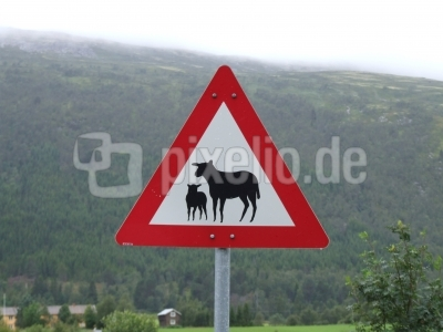 Schaf Verkehrszeichen / Sheep sign