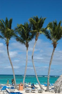W wie PalmWedel