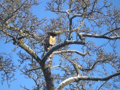 ein Vogelhaus hoch im Baum
