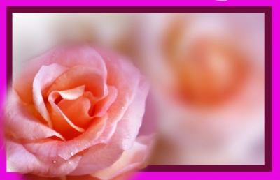 Sehnsucht nach Rosen