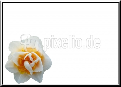 Hintergrund Blumen 85