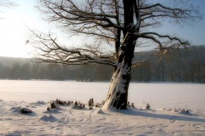 Baum im Park von Greiz