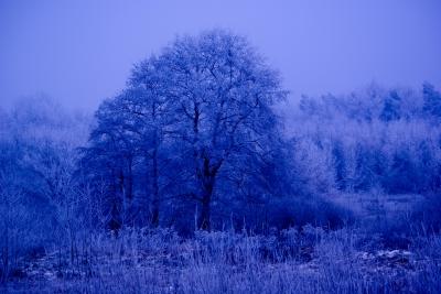 Winter in Blau