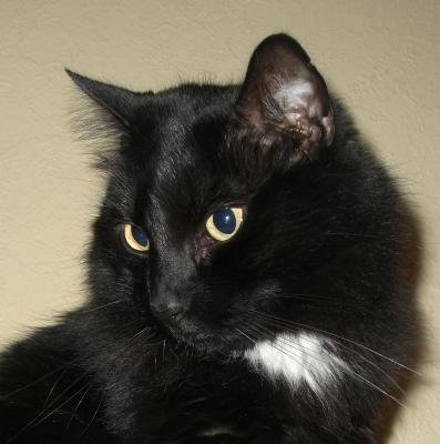 Katzenpassfoto