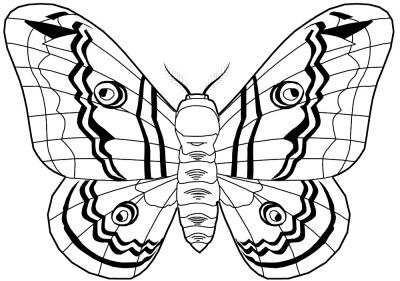 Werkzeugspitze - Schmetterling 4
