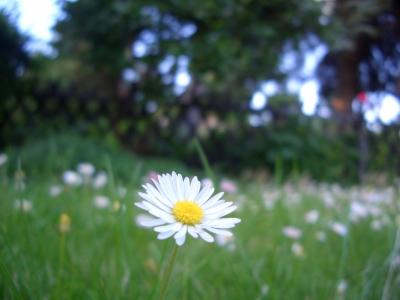 Eine Blume kommt selten Alleine