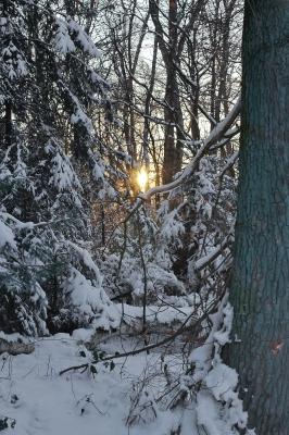 Winter im Broichbachtal 11