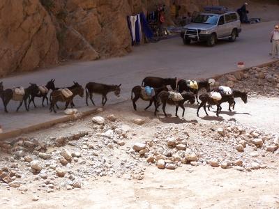 Eselkarawane in der Tinerhir-Schlucht Marokko