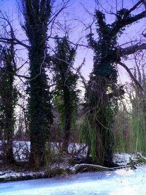 Winter aufnahmen aus Wolfenbüttel 14