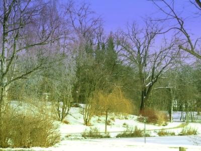 Winter aufnahmen aus Wolfenbüttel 19
