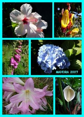 Erinnerung an Madeira