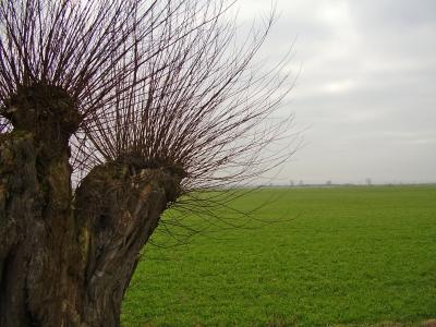 Alte Weide und Wiese