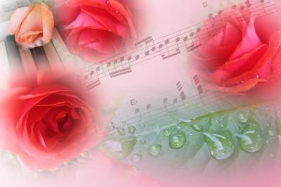 Rosen und Musik - eine Einheit