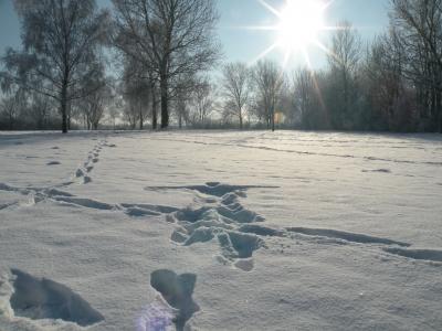 Winterimpressionen 11