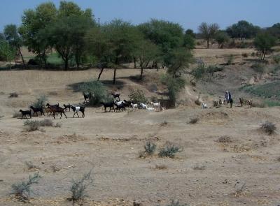trockene Landschaft in Nordindien