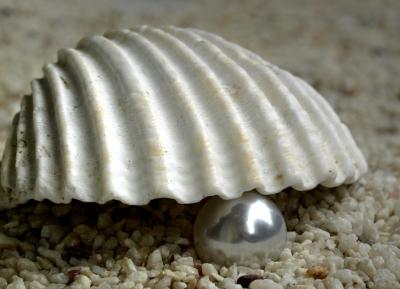 Muschel und Perle