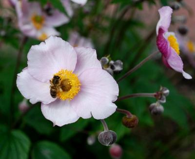 Diesmal wird´s Blütenhonig