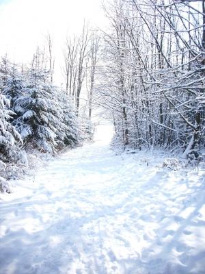 Spuren im Winterwald