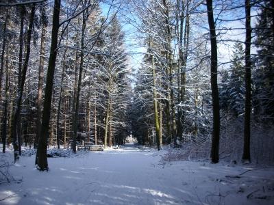 Spuren im Wald