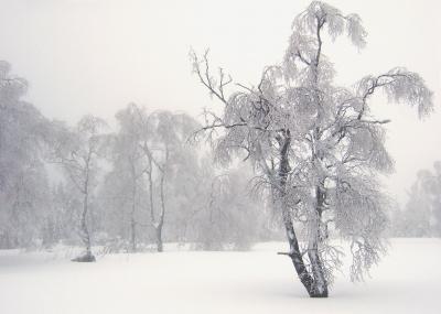 Gespenstische Winterwelt