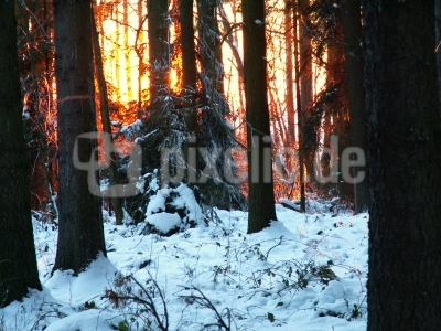 Kein Waldbrand !