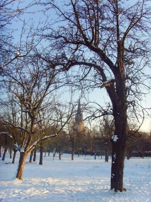 Obstbaumwiese, mit Kirche,  im Winter