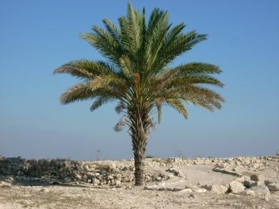 Palme auf trockenem Land