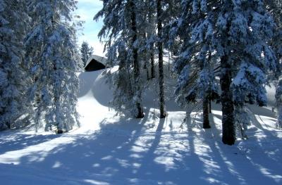 Die Hütte im Wald