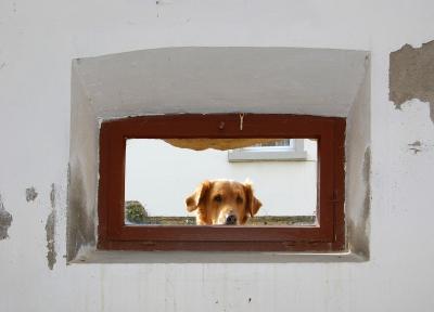 Das Kellerfenster