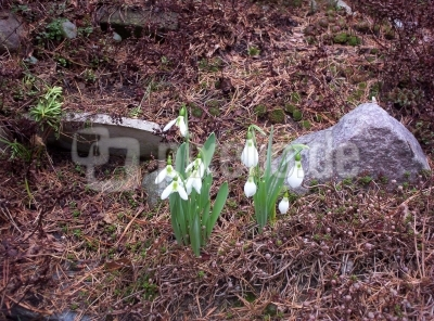 Der Frühling naht!