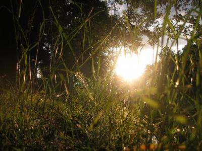 Sonneuntergang im Gras