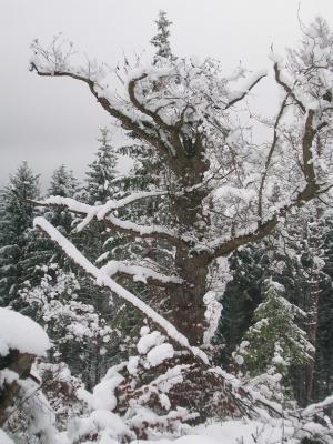 tragender Baum...