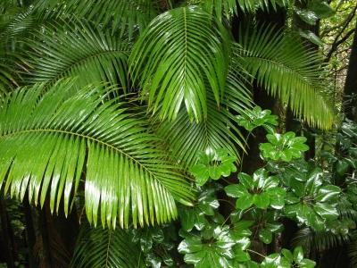 Regenwald macht seinem Namen Ehre