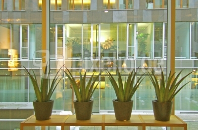 Mehr Grün im Büro