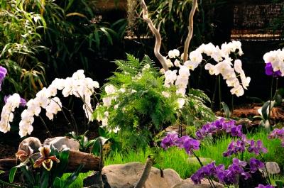 Kostenloses foto orchideen arrangement 2 - Orchideen arrangement ...