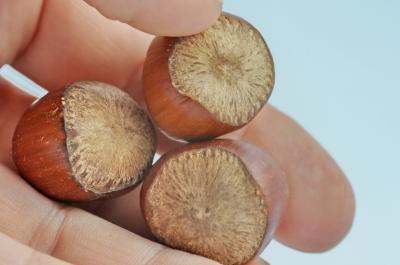 Drei Nüsse für Aschenbrödel