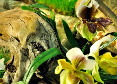 Orchideenarrangement 1