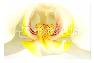 Blüten 239