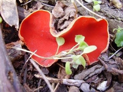 Unbekannte Pilzart (3)