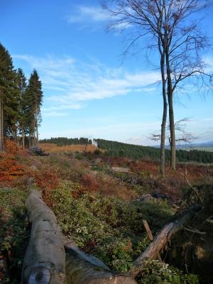 Wald nach Kyrill