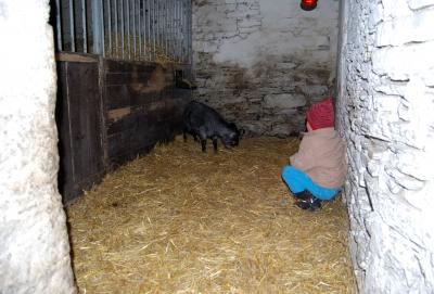 Besuch bei der Ziegenfamilie